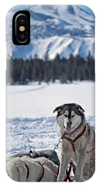 Dog Team IPhone Case
