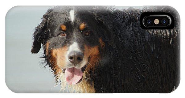 Bernese Mountain Dog iPhone Case - Dog Walks Near Sea by Aleksey Tugolukov