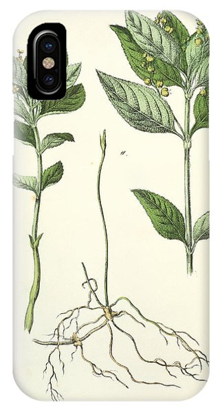 Dog's Mercury Phone Case by Sheila Terry/science Photo Library