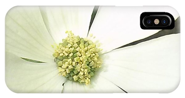 Dogwood 1 Phone Case by Janet Berch