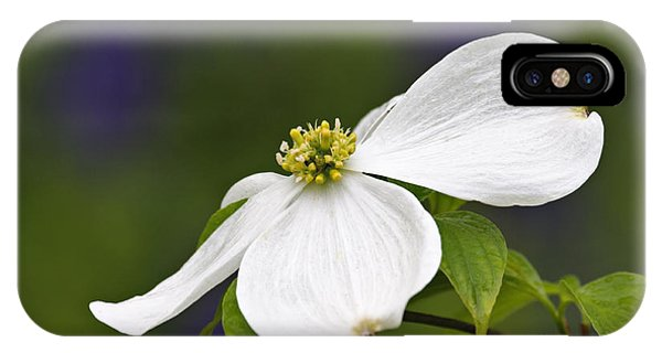 Dogwood Blossom - D001797 IPhone Case