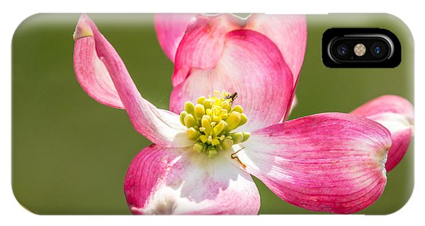 Dogwood Close-up IPhone Case