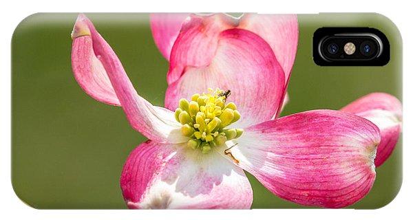 Dogwood Close-up IPhone Case