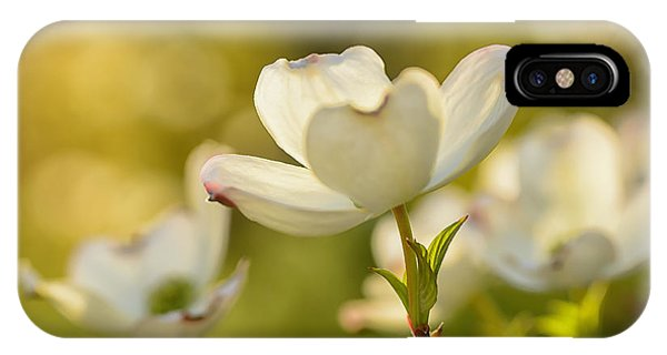 dogwood tree iphone case dogwood dappled sunlight by thomas r fletcher