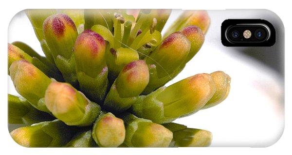 Kingsville iPhone Case - Dogwood Flower Close Up by Lee Ann Stamm