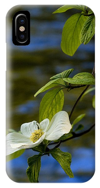 Dogwood On The Merced IPhone Case