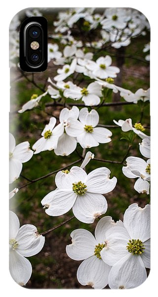 Dogwoods IPhone Case