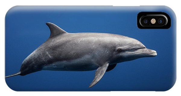Dolphin iPhone Case - Dolphin by Barathieu Gabriel