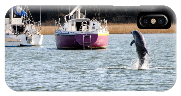 Dolphin In Taylors Creek IPhone Case