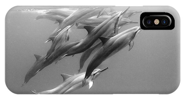 Dolphin iPhone Case - Dolphin Pod by Sean Davey