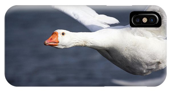 Domesticated Goose In Flight Phone Case by John Devries/science Photo Library