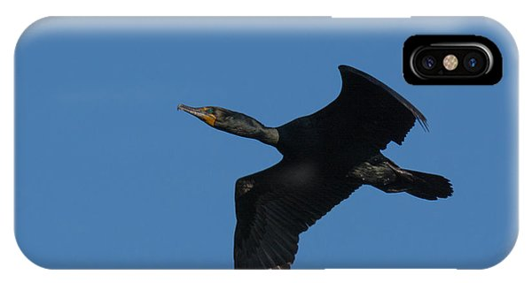Double-crested Cormorant In Flight IPhone Case