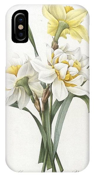 Botanical iPhone Case - Double Daffodil by Pierre Joseph Redoute