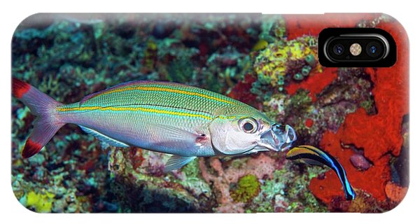 Double-lined Fusilier With Cleaner Wrasse Phone Case by Georgette Douwma/science Photo Library