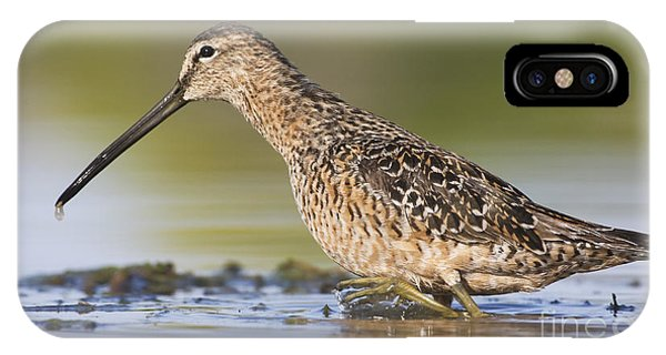 Dowitcher In The Water IPhone Case