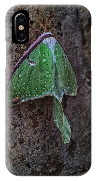 Moth iPhone Case - Down On The Corner by Susan Capuano