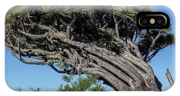 Monocotyledon iPhone Case - Dragon Tree by Alfred Pasieka