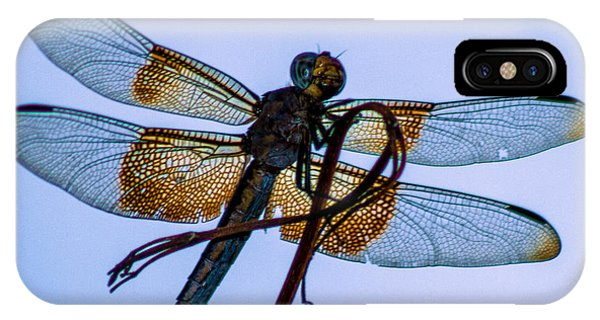 Dragonfly-blue Study IPhone Case