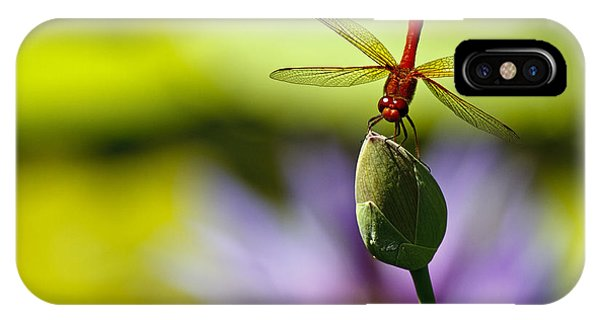Dragonfly Display IPhone Case