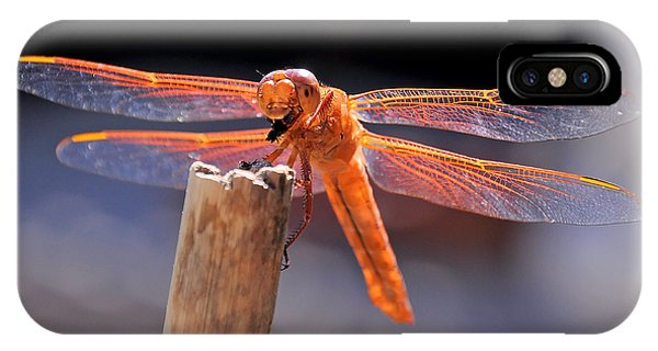 Dragonfly Eating An Insect IPhone Case