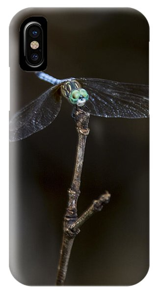 Dragonfly On Branch IPhone Case