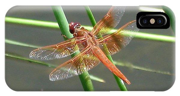 Dragonfly Orange IPhone Case