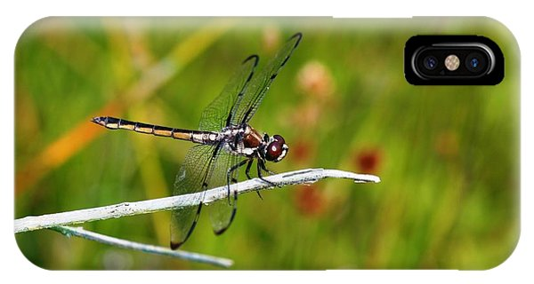 Dragonfly Perch IPhone Case