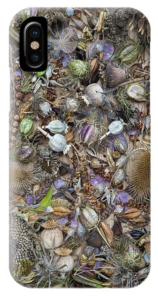 Sunflower Seeds iPhone Case - Dried Flower Seeds by Tim Gainey