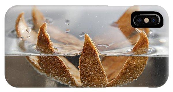 Dried Orange Shell Phone Case by Thomas Olbrich