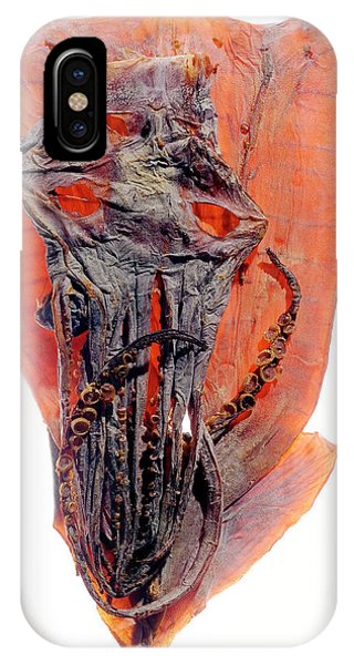Squid iPhone Case - Dried Squid by Daniel Sambraus/science Photo Library