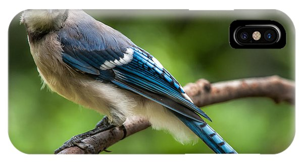 Droll Jay IPhone Case