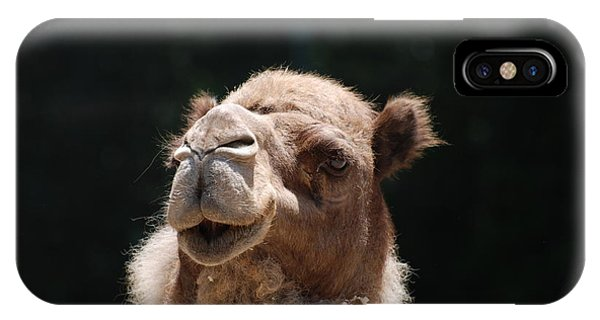Dromedary Camel Face IPhone Case