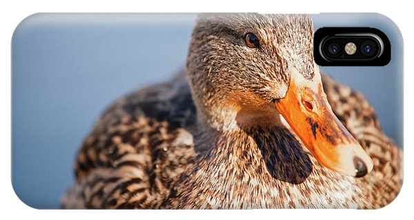 Anas Platyrhynchos iPhone Case - Duck In Water by Christopher Kimmel