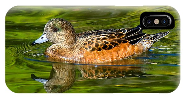 Young Female Mallard Duck IPhone Case