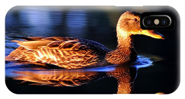 Duck On A River With Refletion IPhone Case
