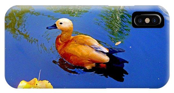 Mallard iPhone Case - Duck Pond by Carey Chen