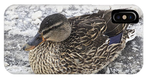 Duck Setting On A Winter Road IPhone Case