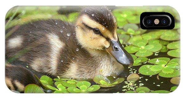 Duck Soup 3 IPhone Case