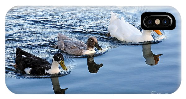 Duck Trio Reflecting IPhone Case