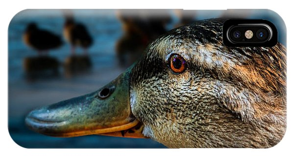 Mallard iPhone Case - Duck Watching Ducks by Bob Orsillo