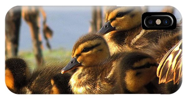 Ducklings IPhone Case