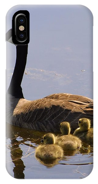 Ducks In A Row IPhone Case