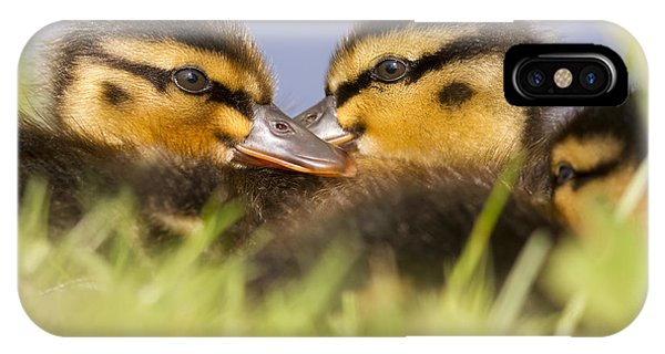 Anas Platyrhynchos iPhone Case - Ducktwins by Roeselien Raimond
