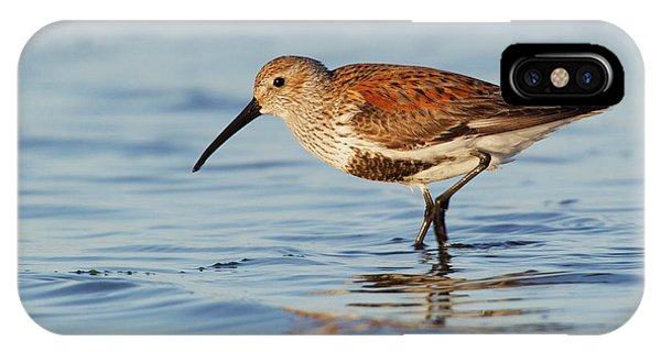 Dunlin Phone Case by Ken Archer