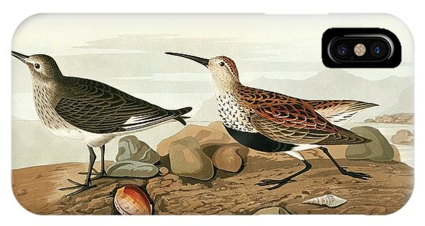 Dunlins Phone Case by Natural History Museum, London/science Photo Library