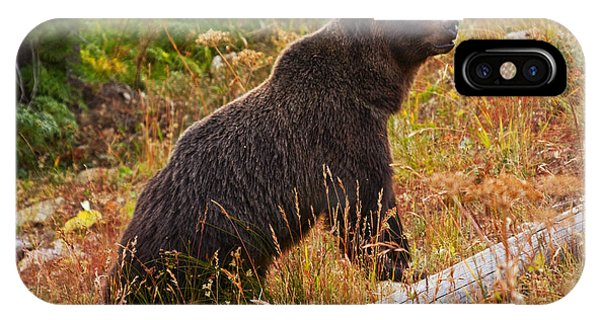 Dunraven Grizzly IPhone Case