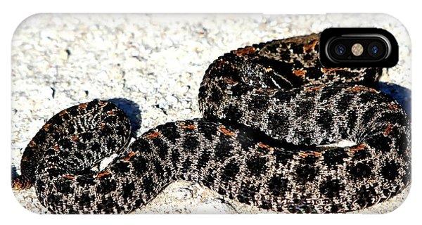 Dusky Pygmy Rattlesnake IPhone Case