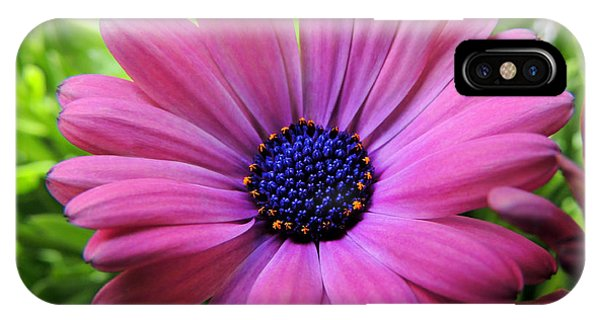Dusky Rose Fortunette IPhone Case