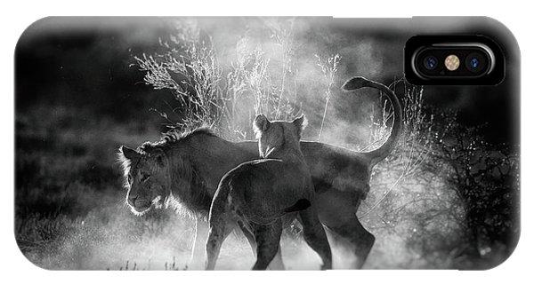 Lion iPhone Case - Dust by Jaco Marx
