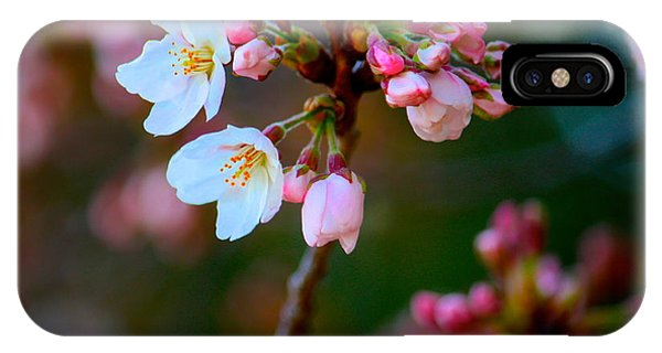 Early Cherry Blossoms IPhone Case